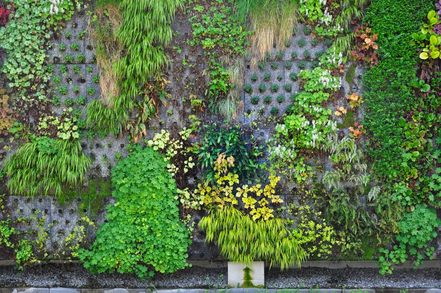 Magnifique jardin vertical extérieur.