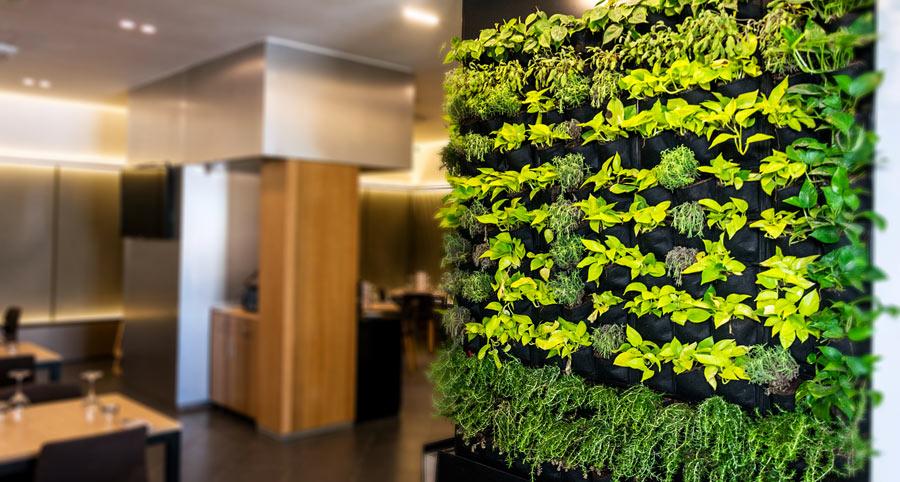 paroi verte, jardin vertical d'intérieur.