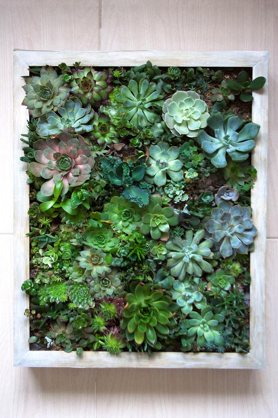 Cadre végétal avec succulentes et plantes grasses.