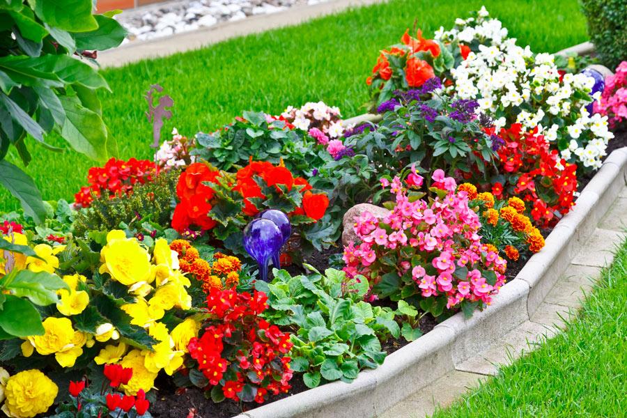 rocaille fleurie jardin