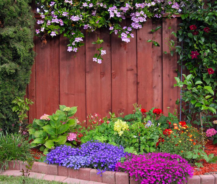 Rocaille de fleurs violet et fuchsia.