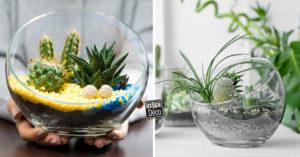 idées terrarium DIY décoration.