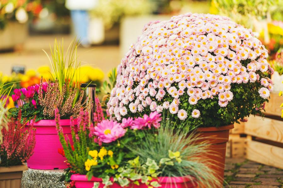 Bel vaso particolare con margherite in giardino.