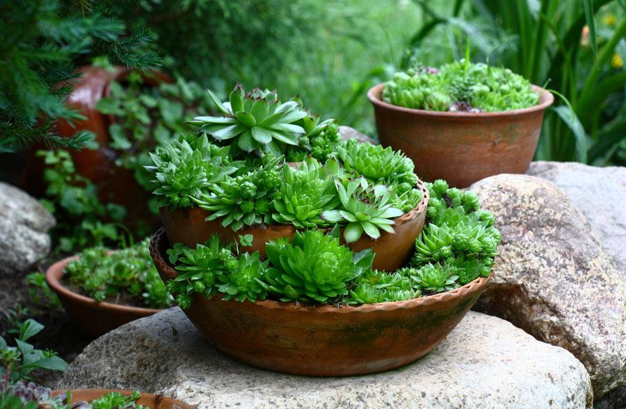Vaso di terracotta particolare in giardino con piante grasse.