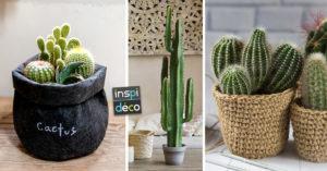 cactus en vase pour décorer la belle saison