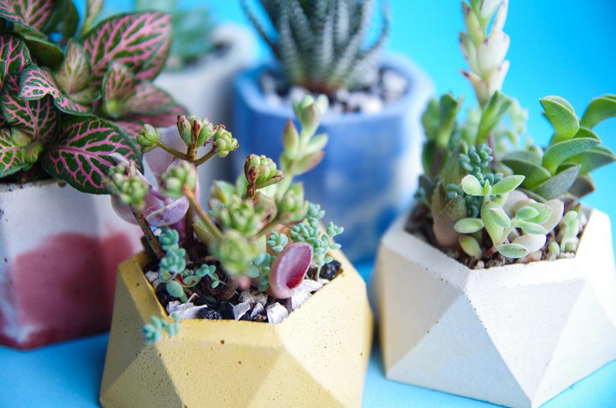 Compositions de plantes grasses dans des petits pots en ciment.