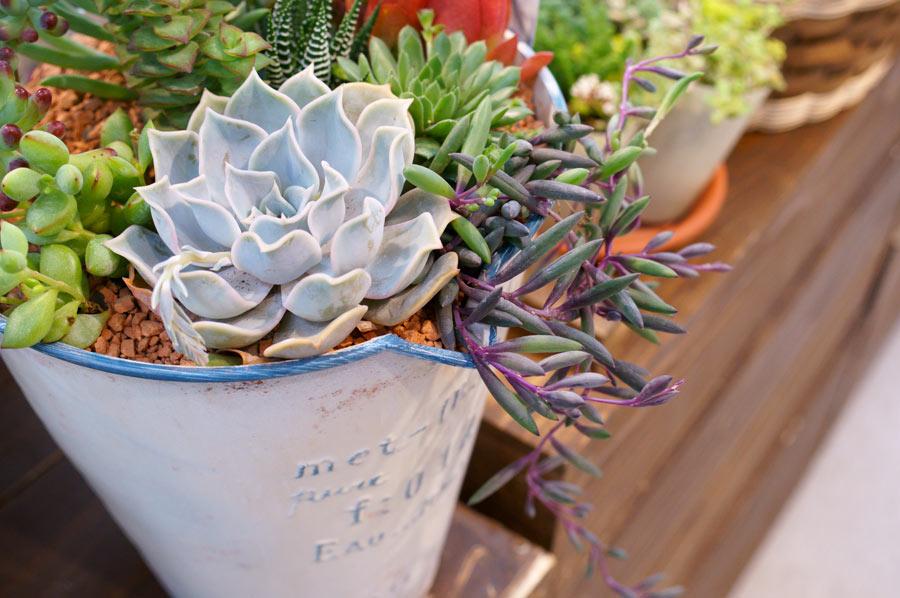 Plantes grasses en pot.