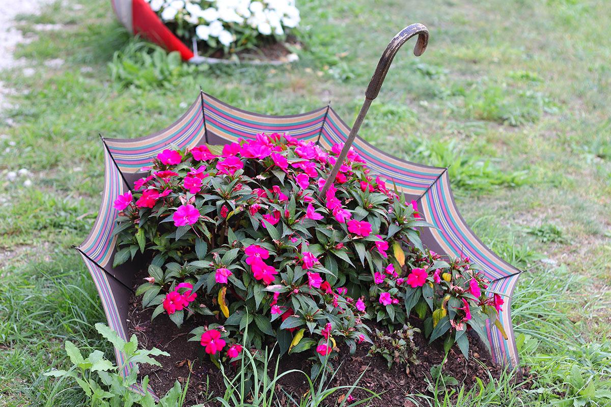 vieux parapluie devient un bac à fleurs dans le jardin