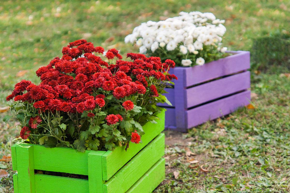 cagettes de fruits recyclées avec fleurs