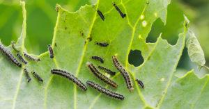 éloigner insectes dans le jardin avec des remèdes naturels