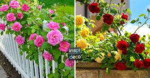 Roses jardin inspirations.