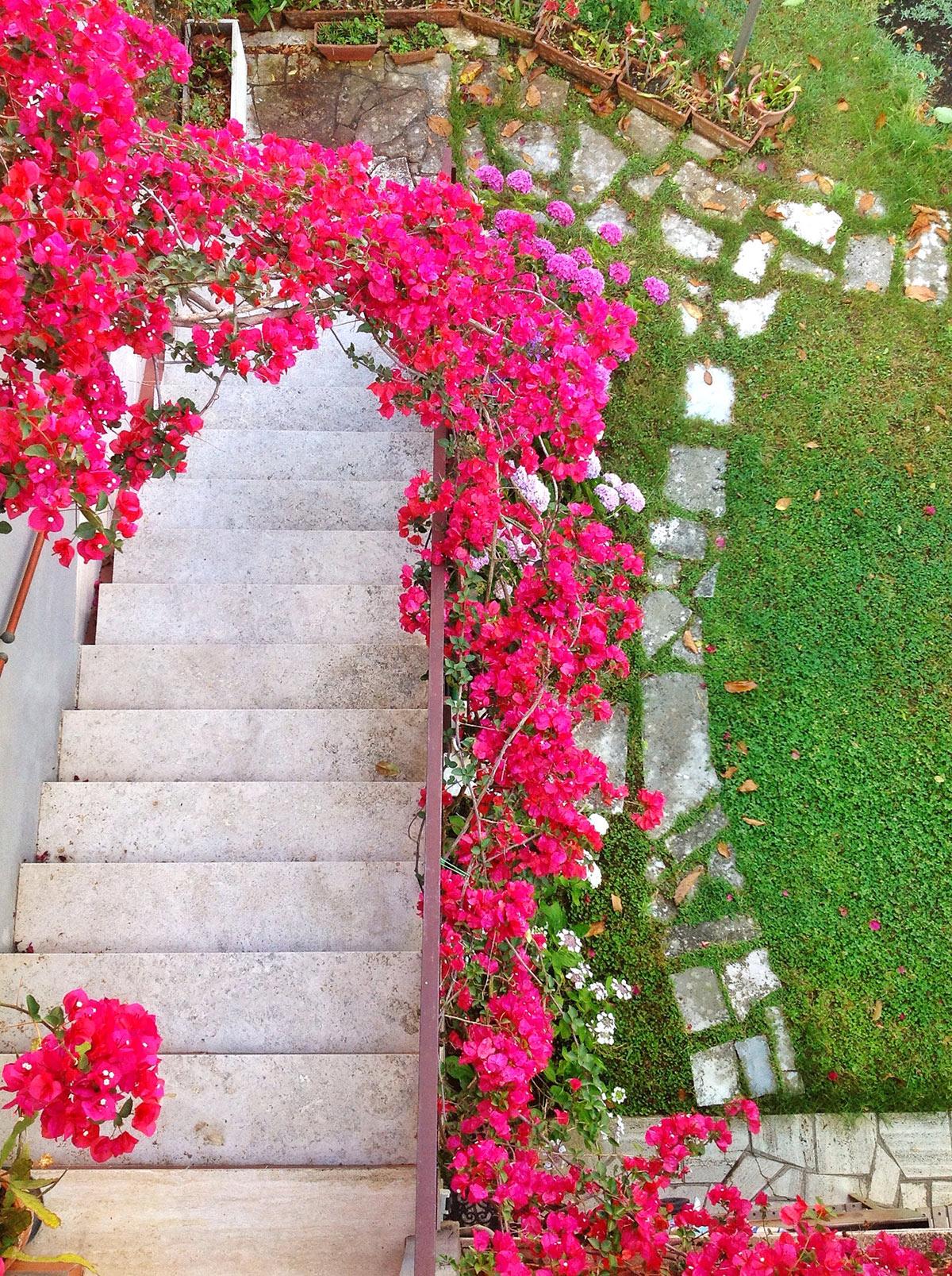 Roses autour d'un arc dans le jardin.