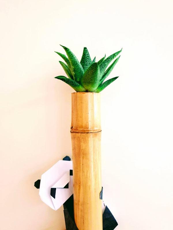 canne de bambou transformé en vase pour plantes