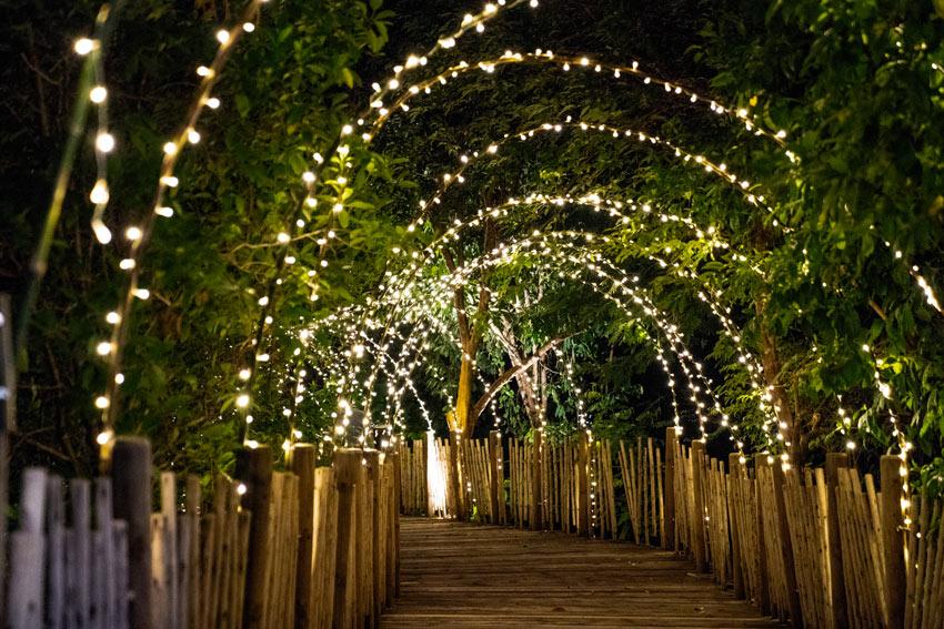 Tunnel de plantes avec lumières