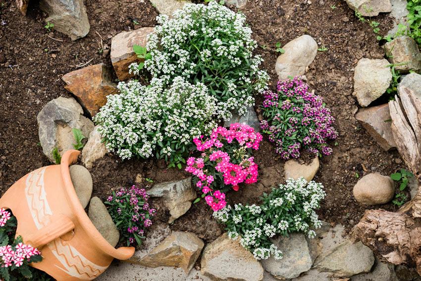 vases en terre cuite avec fleurs colorées