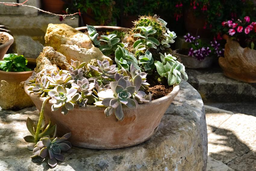 vase en terre cuite avec pierres et plantes
