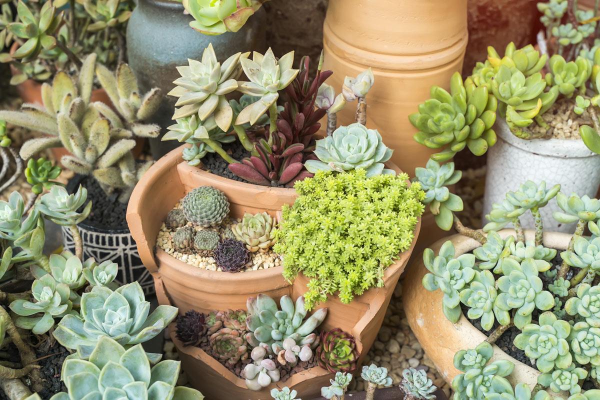 vases en terre cuite dans le jardin
