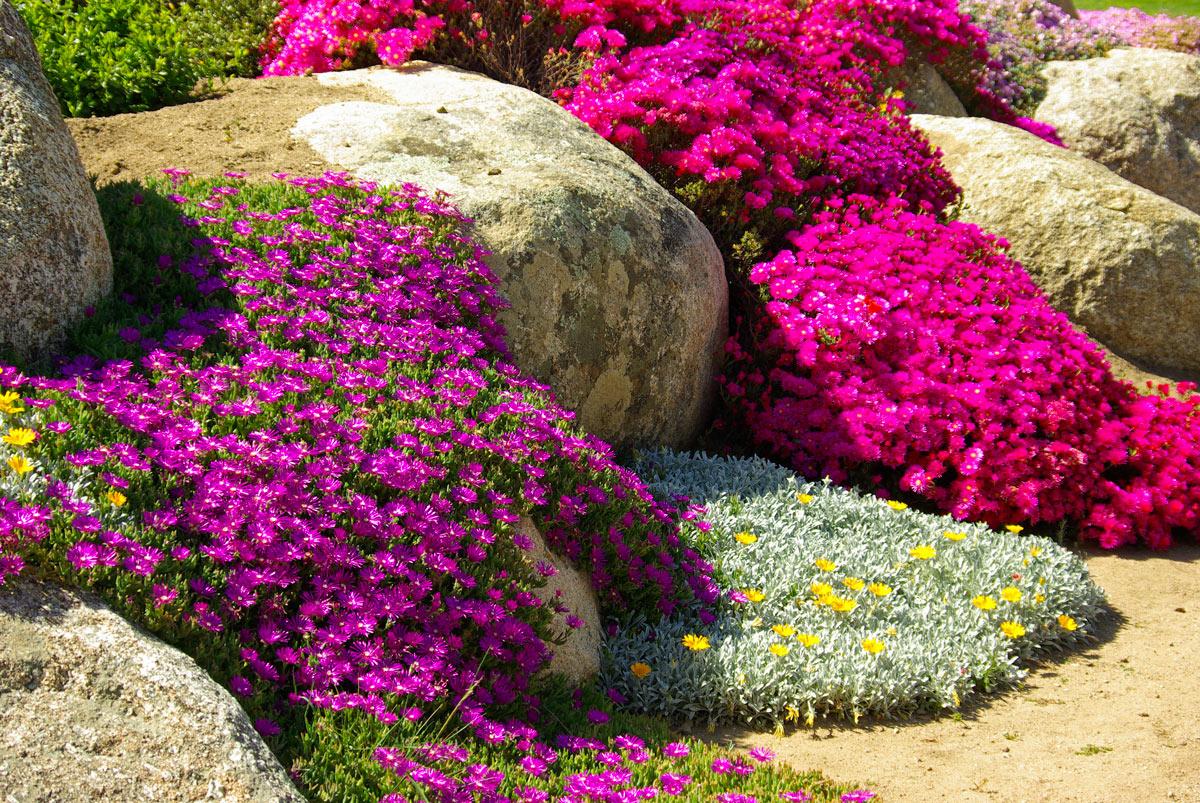 cascade de fleurs dans le jardin