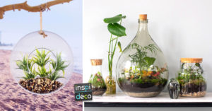 terrariums DIY