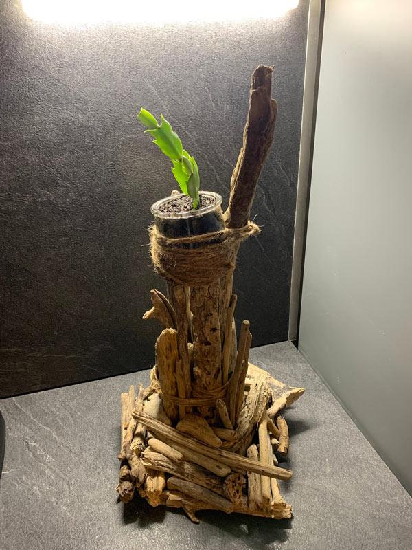 support en bois flotté très original