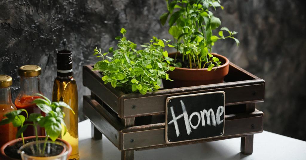 Plantes aromatiques intérieur.