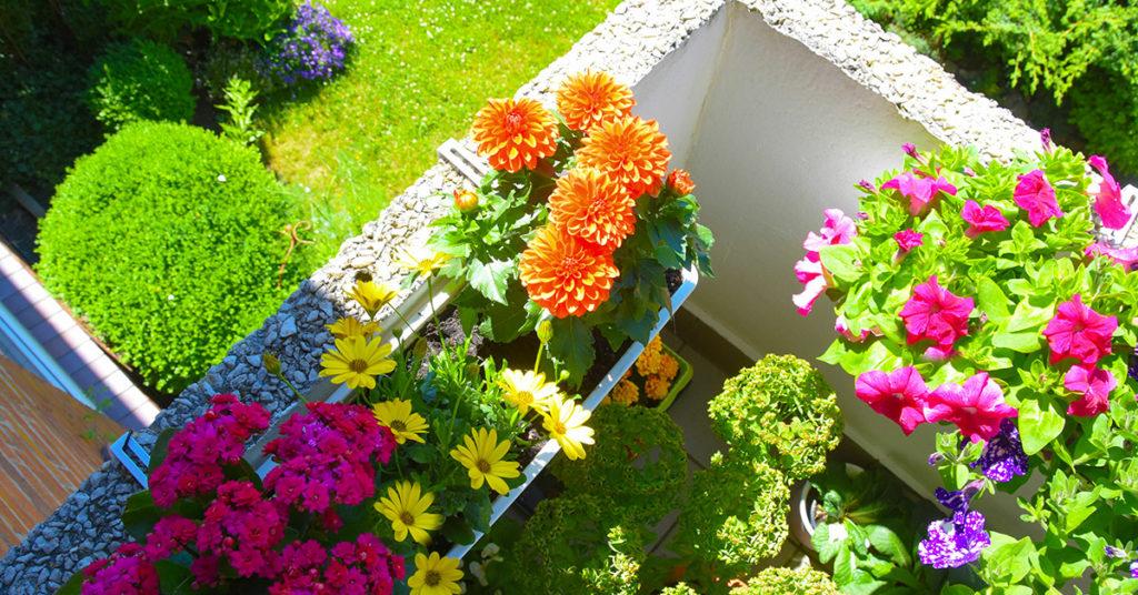 Les fleurs pour embellir terrasse et jardin à l'arrivée des beaux jours