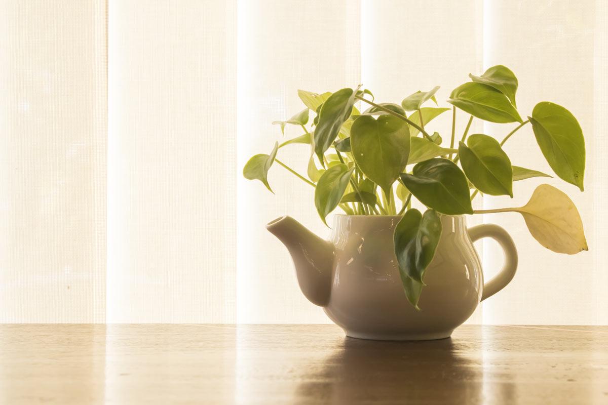 plantes d'intérieur qui nécessitent peu d'eau