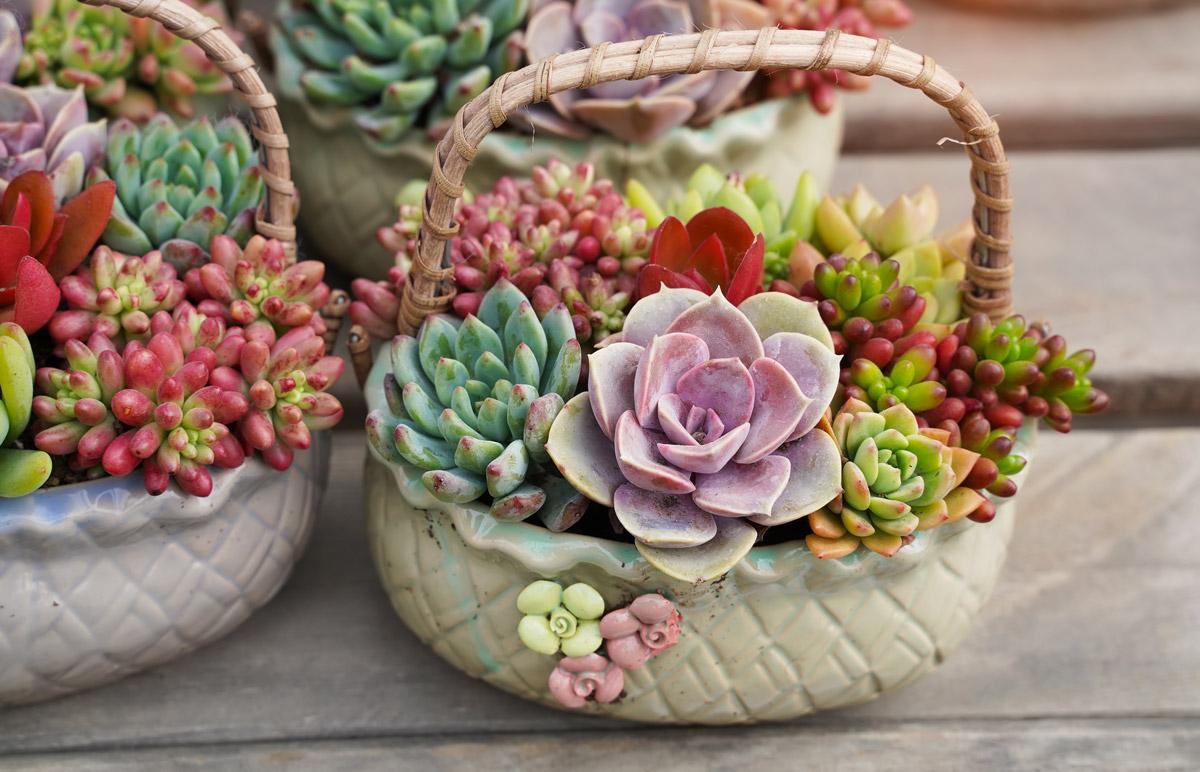Créativité avec des plantes succulentes