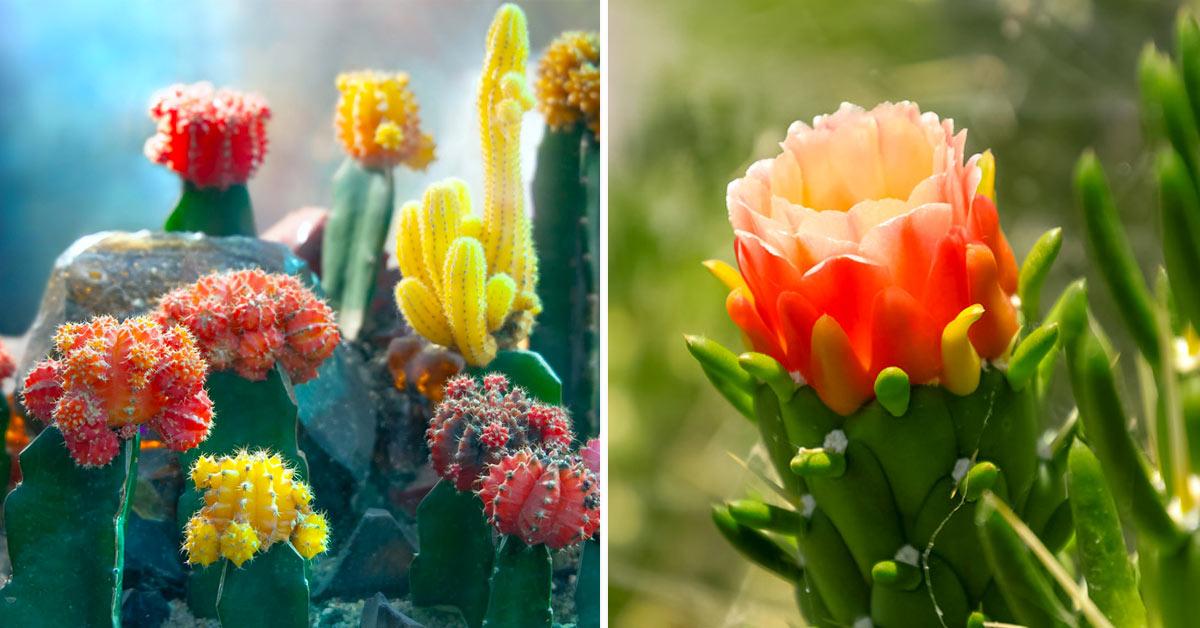 Plantes succulentes rares