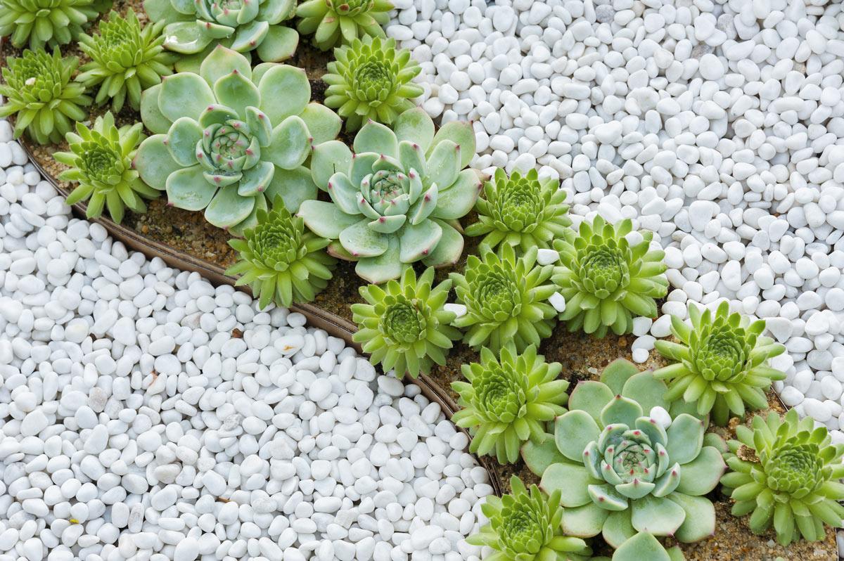 Embellir le jardin avec du gravier.