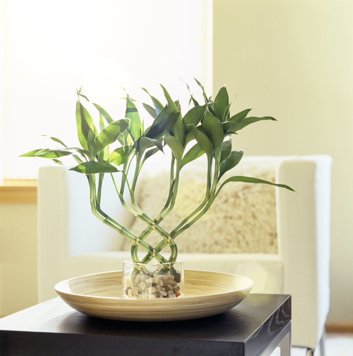 Plantes porte-bonheur