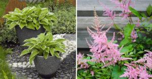 Plantes parfaites pour un balcon ombragé.