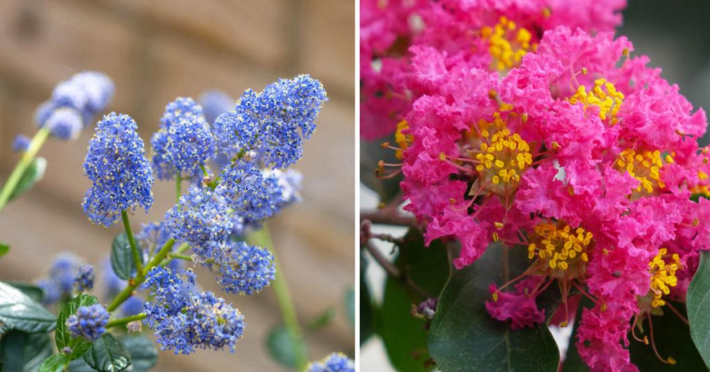 Arbres aux fleurs colorées.