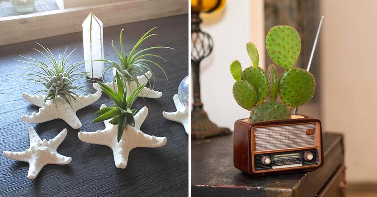 Décorations fantaisistes avec des plantes succulentes.