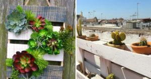 plantes grasses et palettes