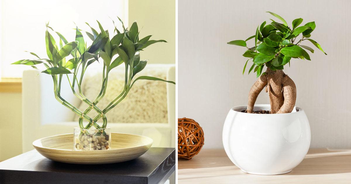 Plantes porte-bonheur.