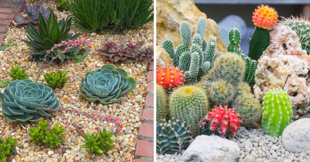 Cultiver des succulentes entre les pierres.