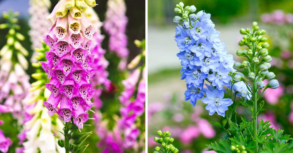 Plantes vivaces à fleurs pour le jardin.