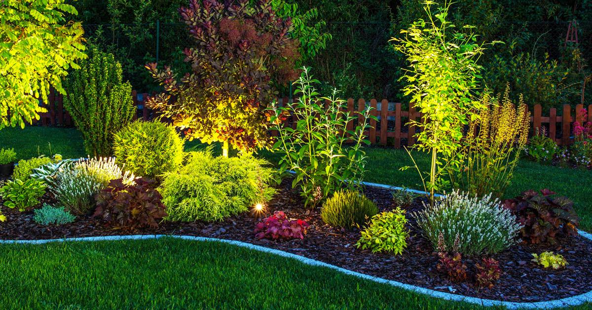 Comment illuminer les plantes dans le jardin.