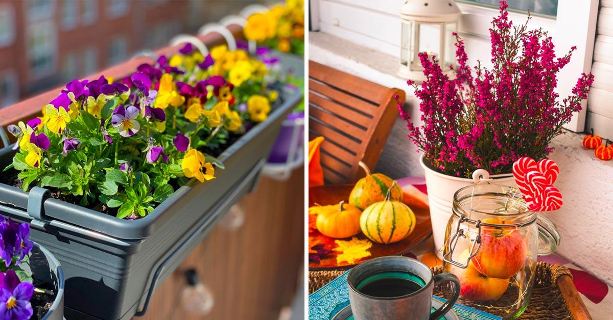 Un balcon super fleuri même en automne.