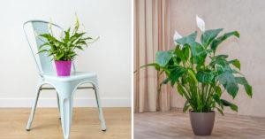 Plante qui aide a mieux dormir.