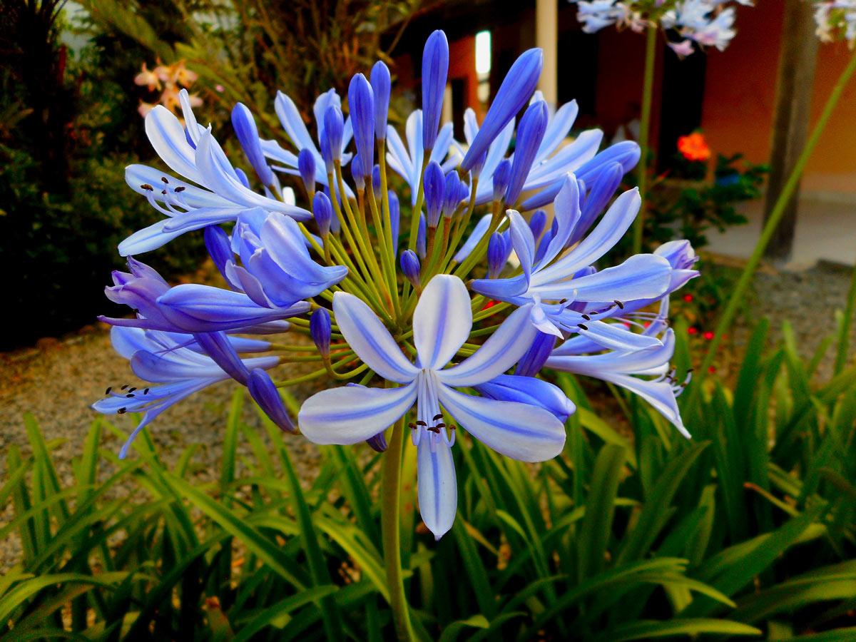 belles fleurs bleues d'automne