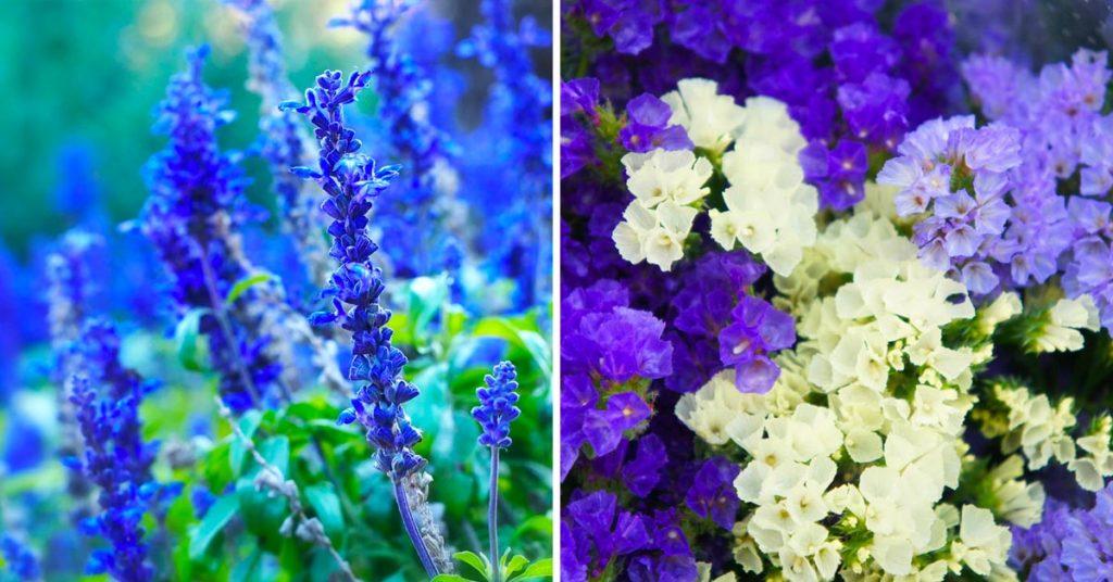 Fleurs bleues d'automne.