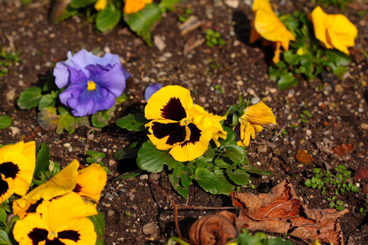 variétés de fleurs colorées en automne
