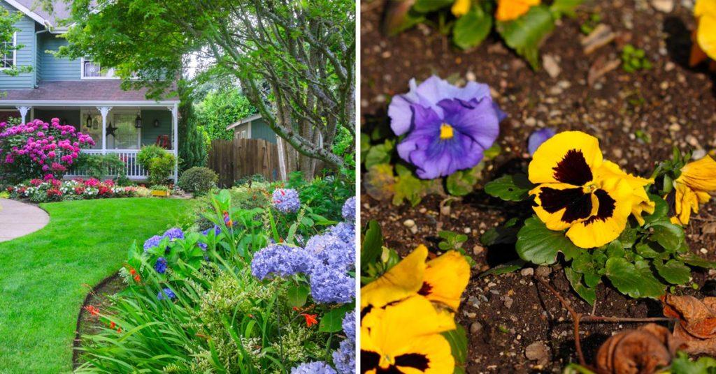 Variétés de fleurs colorées en automne.