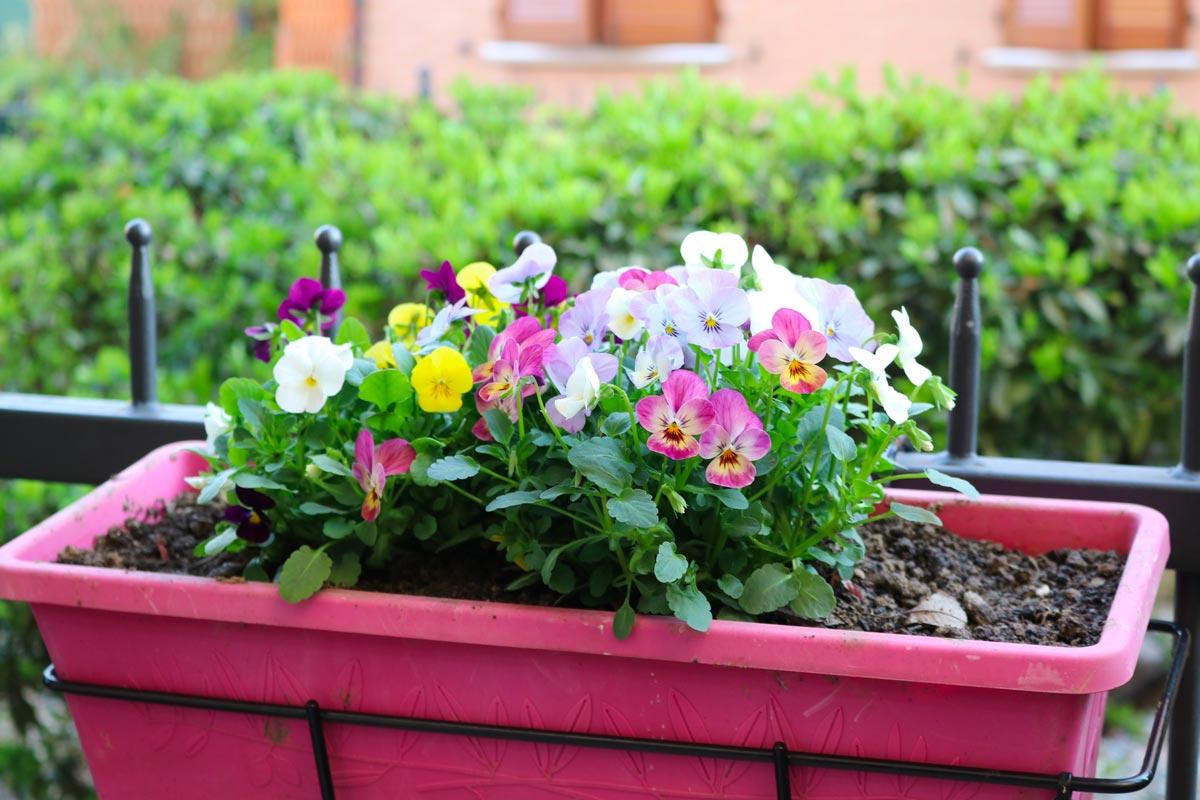 Quelles fleurs peut-on faire pousser en pot en automne