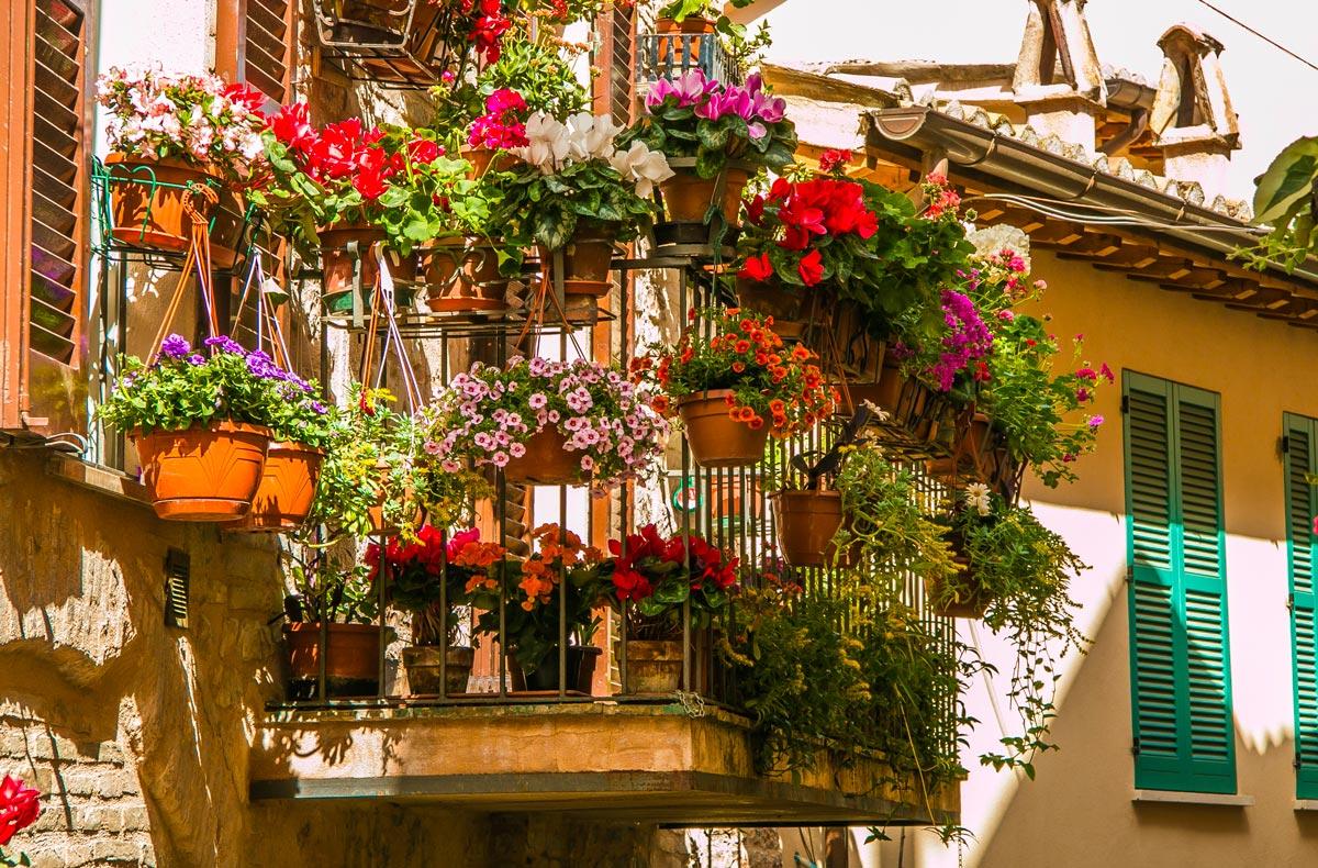 fiori balcone in vaso per l'autunno