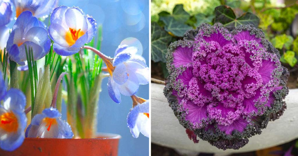 Plantes d'hiver résistantes au froid.
