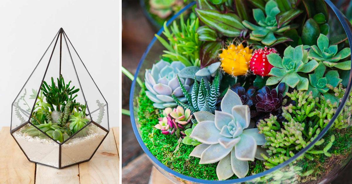 Réaliser un terrarium de succulentes.